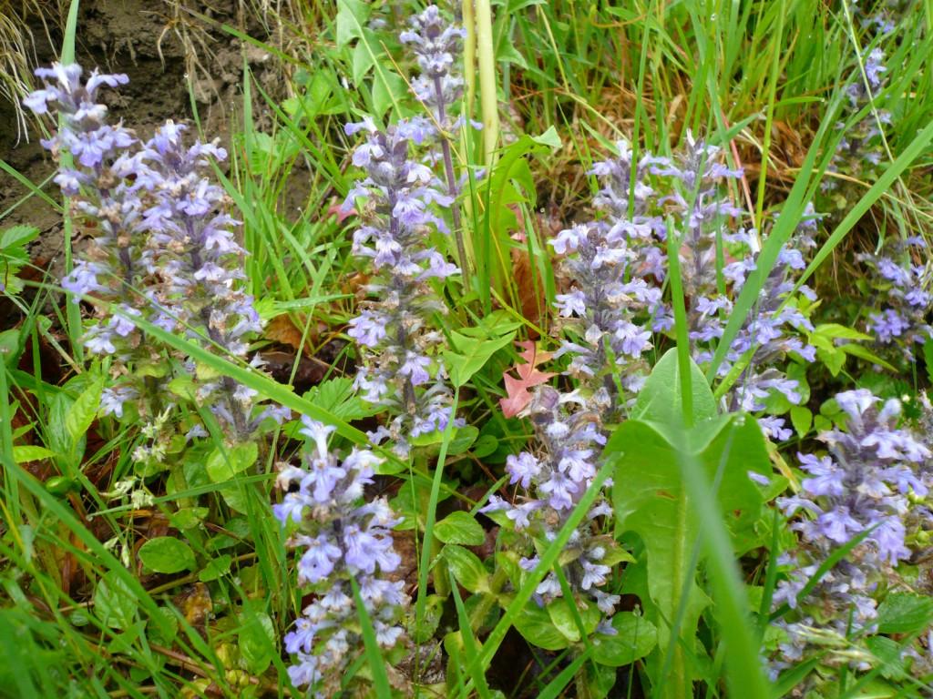 Umgeben von einer ueppigen Flora - hier ein kriechender Guensel